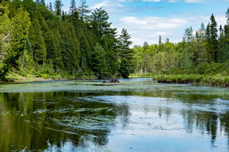 Algonquin Tea Lake_20180701-1